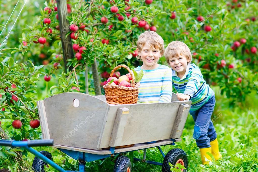 Дети и яблоки 33
