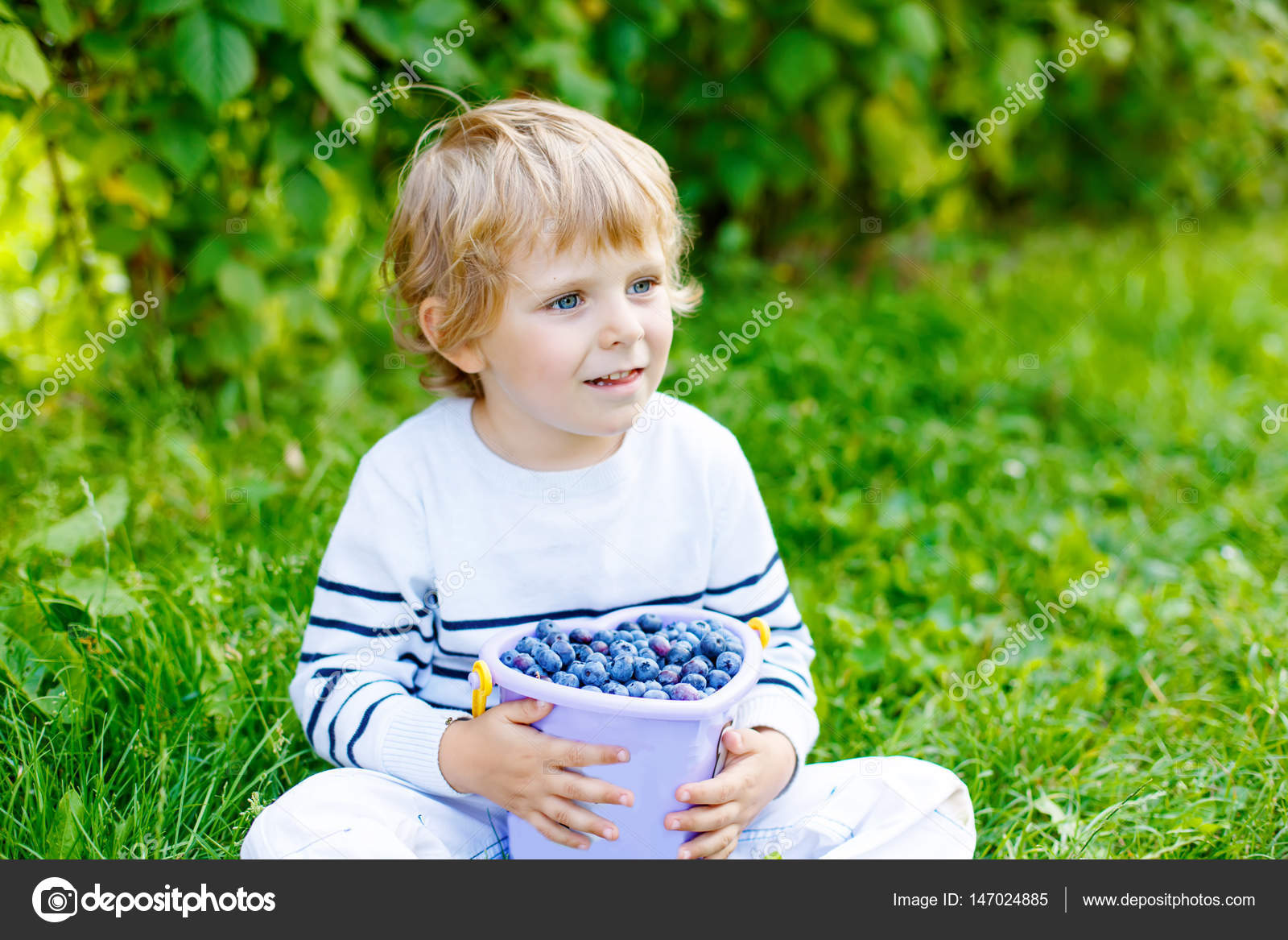 little kid boy picking fresh berries on organic blueberry field farm