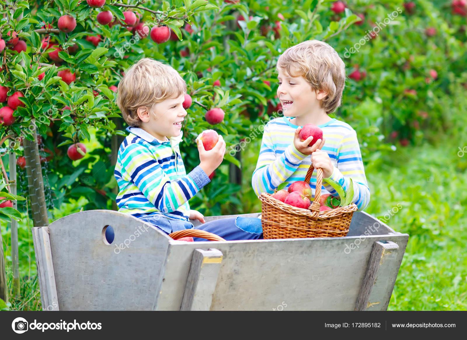 Красивые детей с яблоками 90