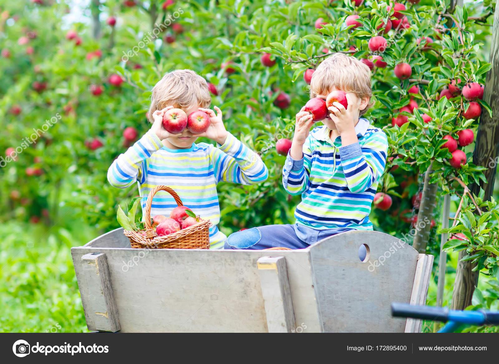 Красивые детей с яблоками 15