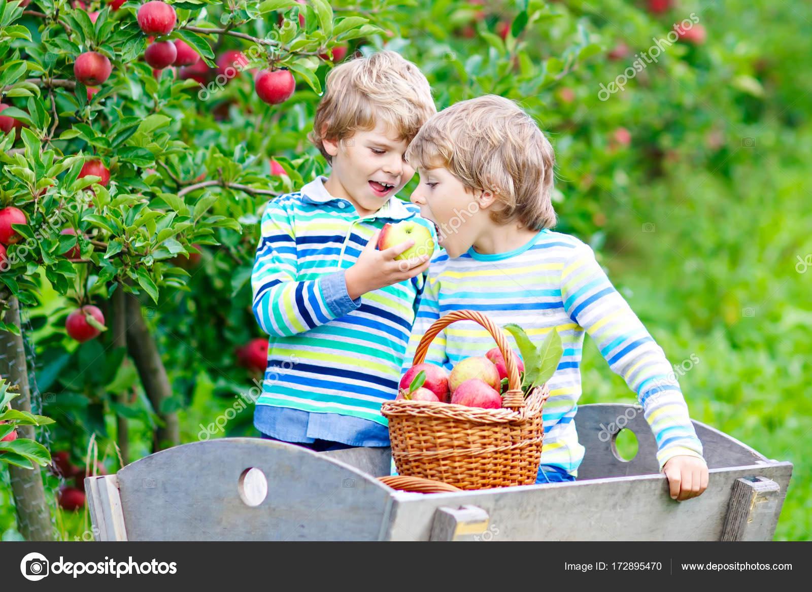 Красивые детей с яблоками 92