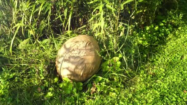 A giant dinosaur egg outside