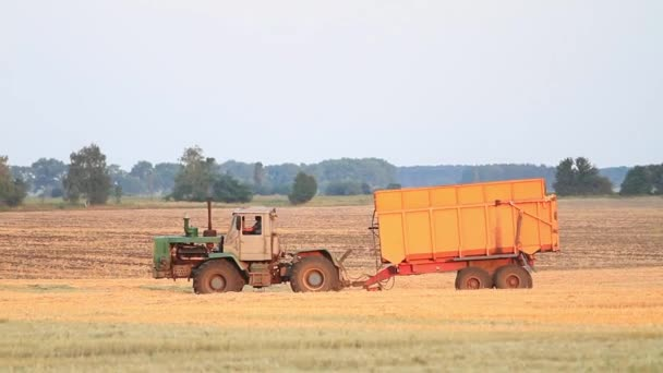 Tractor trailer rides on the mown field