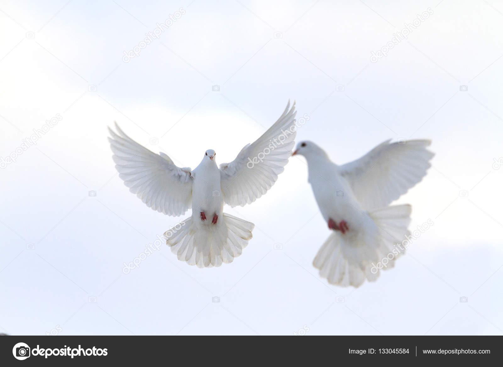 Coppia Di Colombe Bianche Che Volano Nel Cielo Invernale Foto