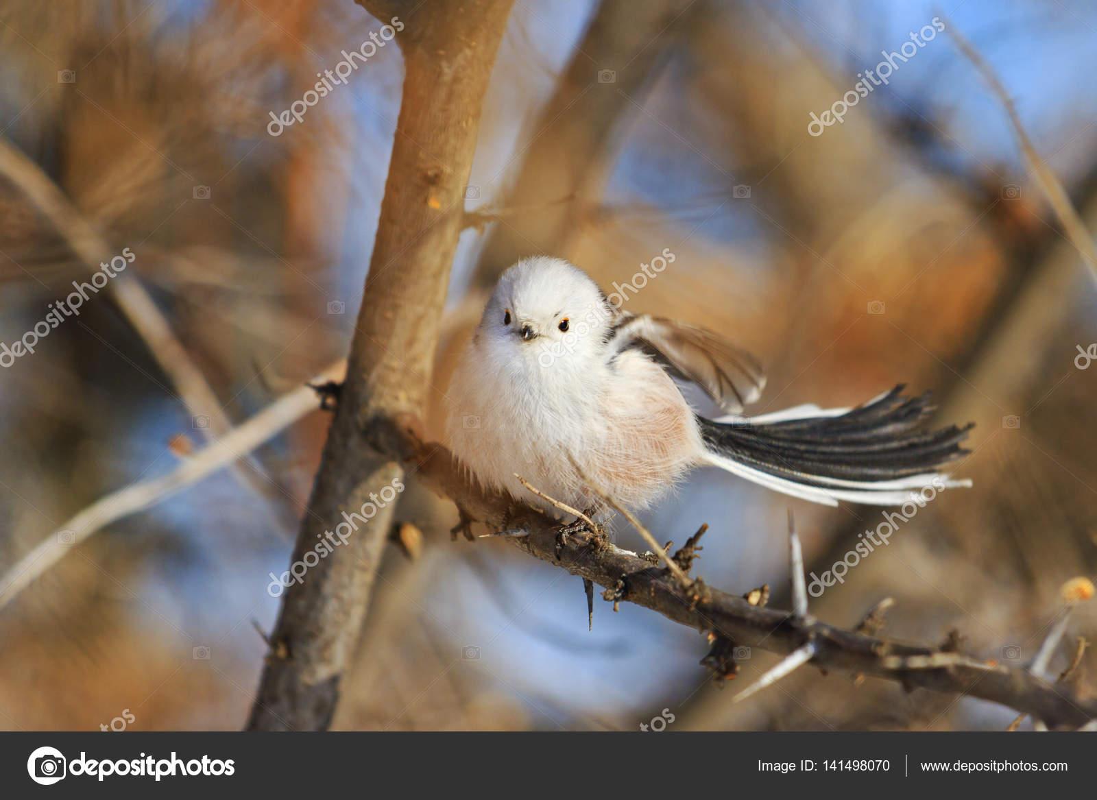 Φωτογραφίες από λευκό πουλί