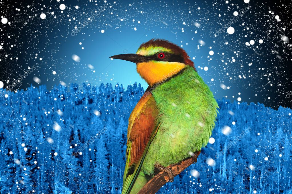 Winter holidays picture of a christmas bird against a background of winter landscape