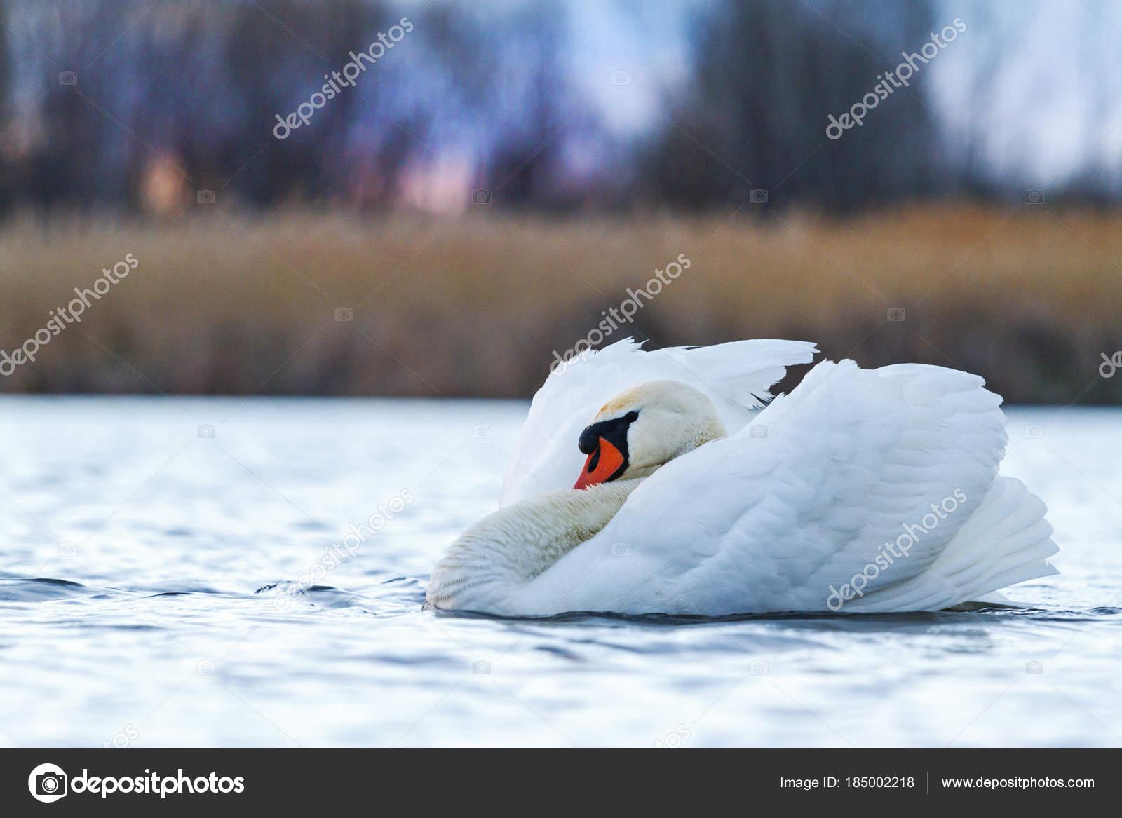 λευκό πουλί εικόνα