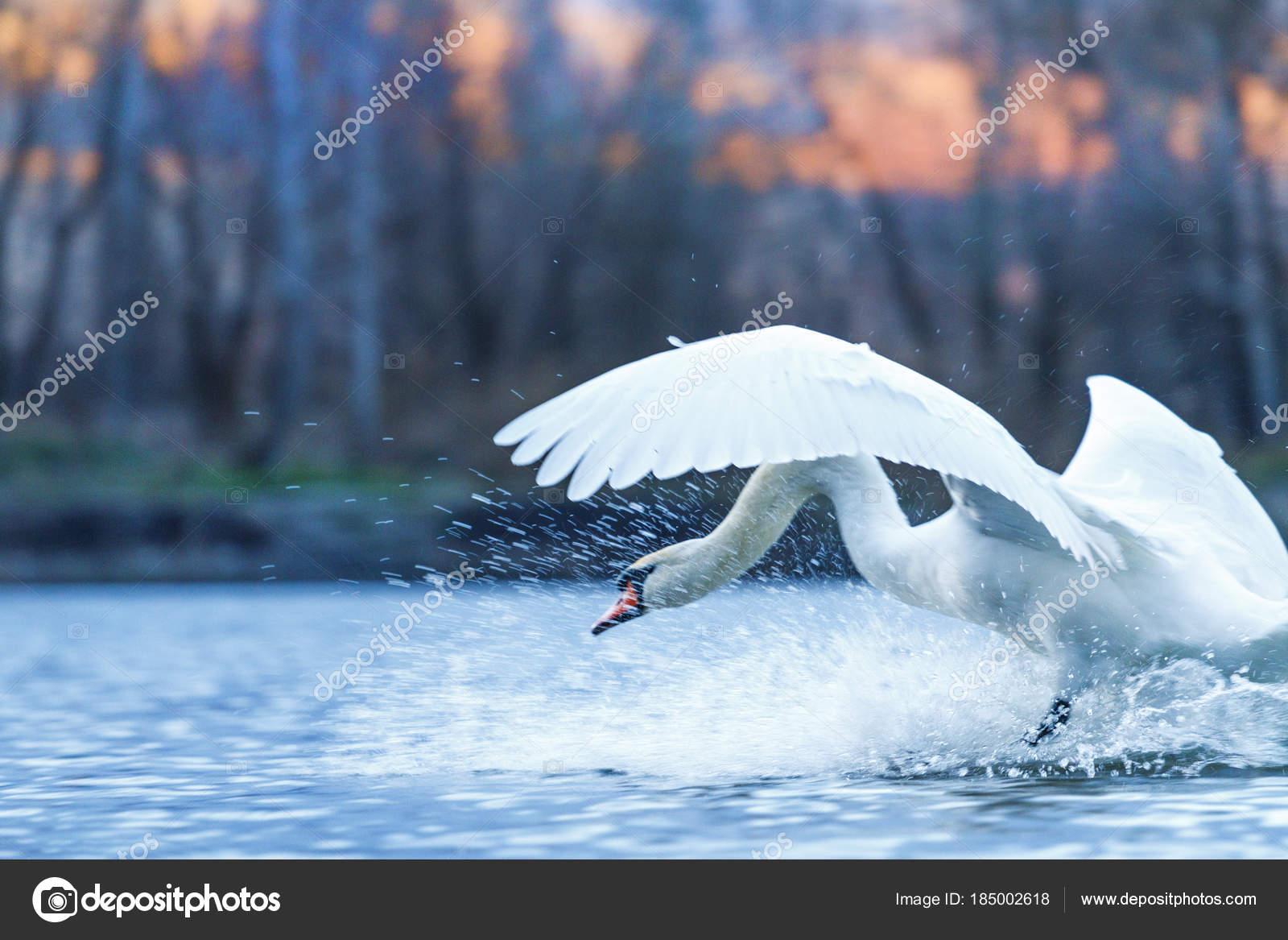 λευκό πουλί εικόνες Teen μουνί βίντεο XXX