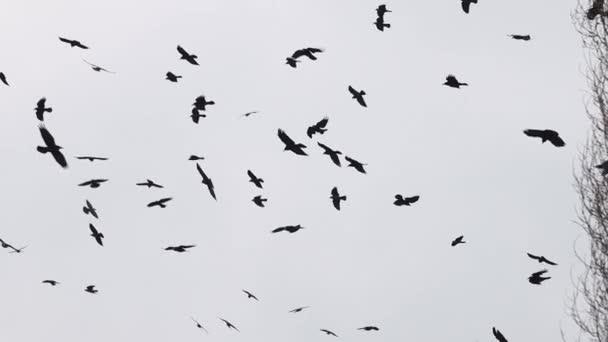 hejno černých ptáků kroužících na obloze