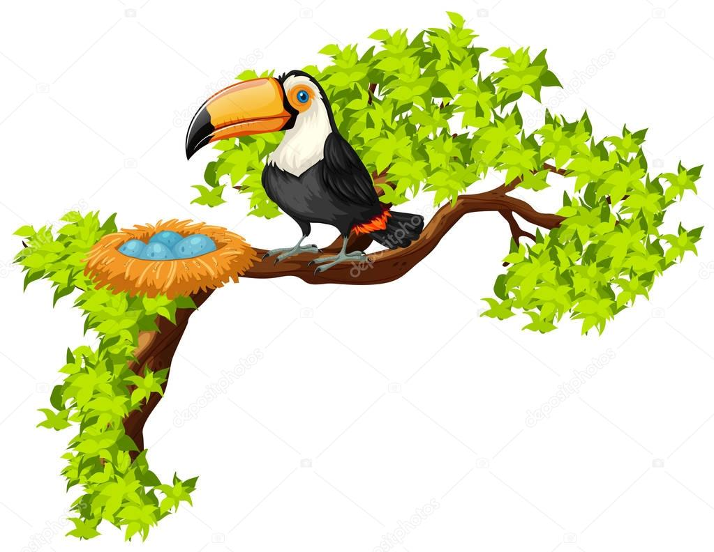 Tucán Y El Nido En El árbol