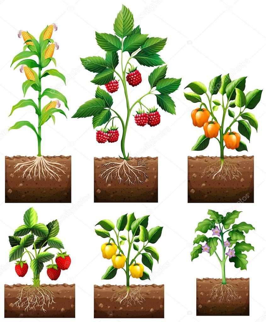 Diferentes tipos de plantas en jard n vector de stock - Tipos de plantas ...