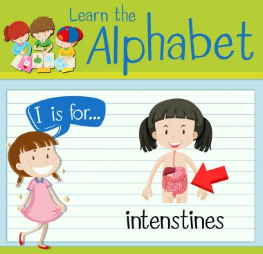 Flashcard letter I is for intenstines