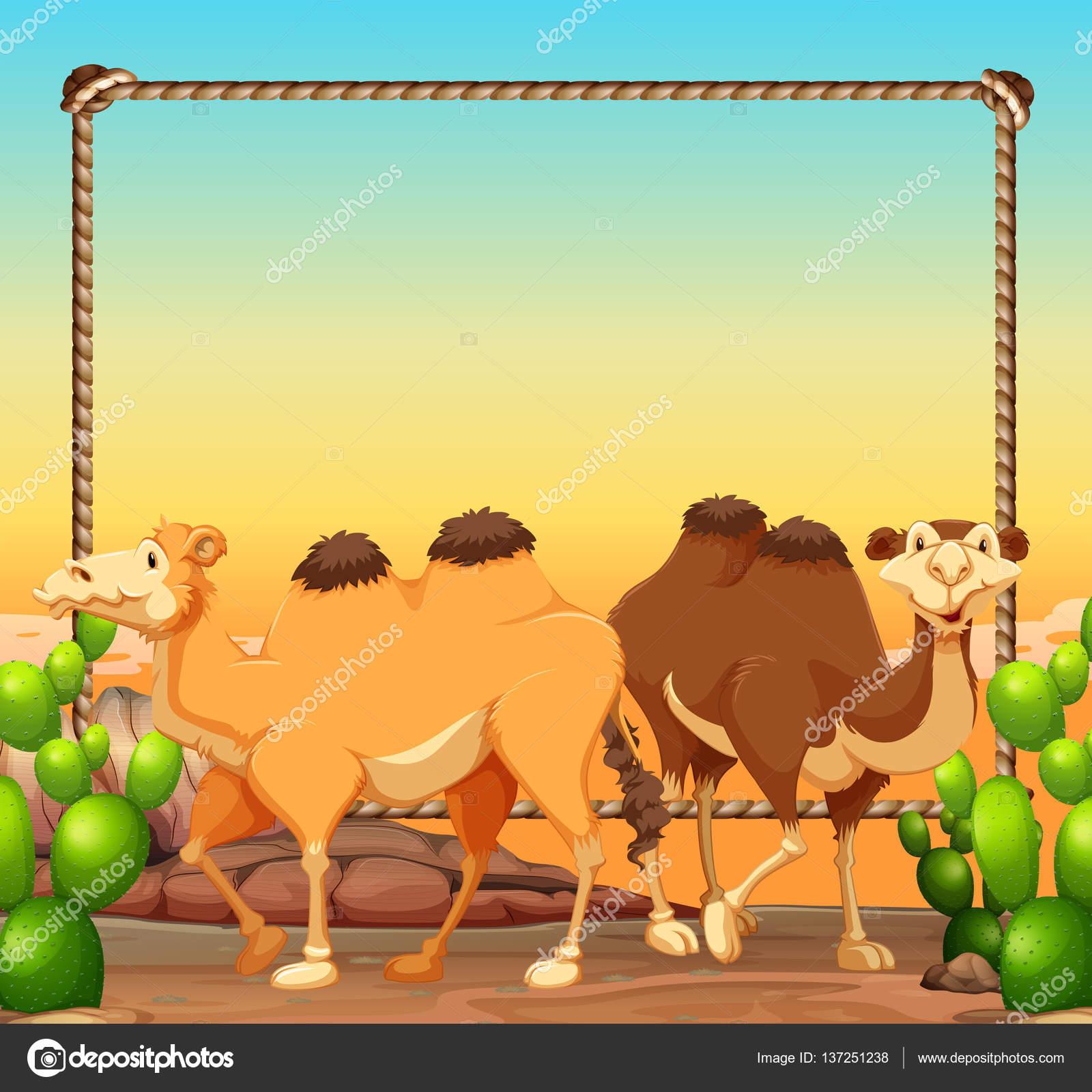 Plantilla de marco con dos camellos en el desierto — Archivo ...