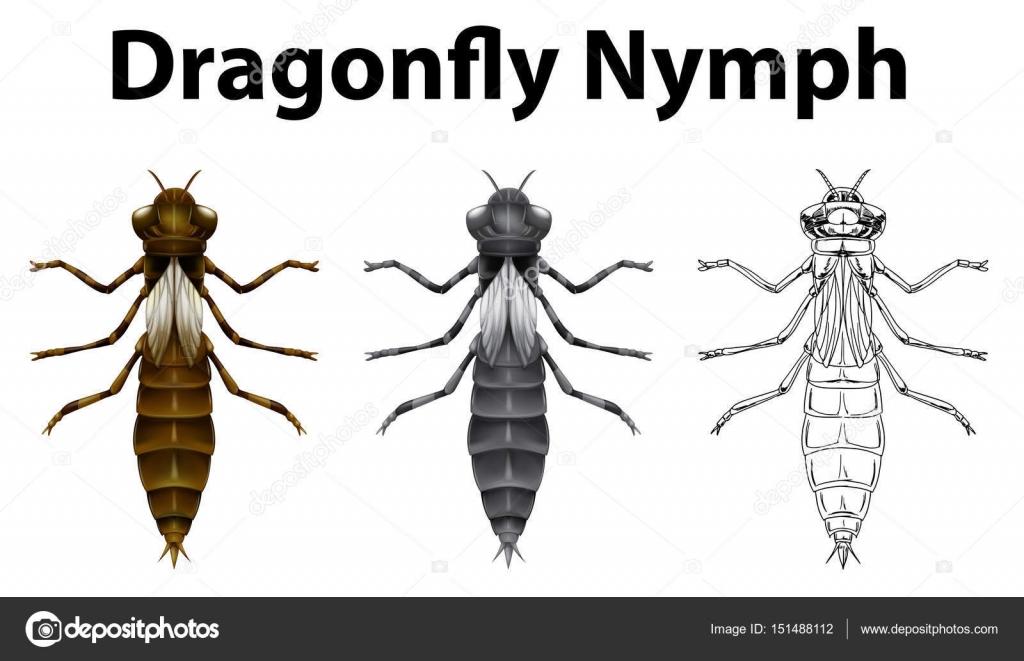Ninfa de libélula en tres estilos diferentes de dibujos — Vector de ...