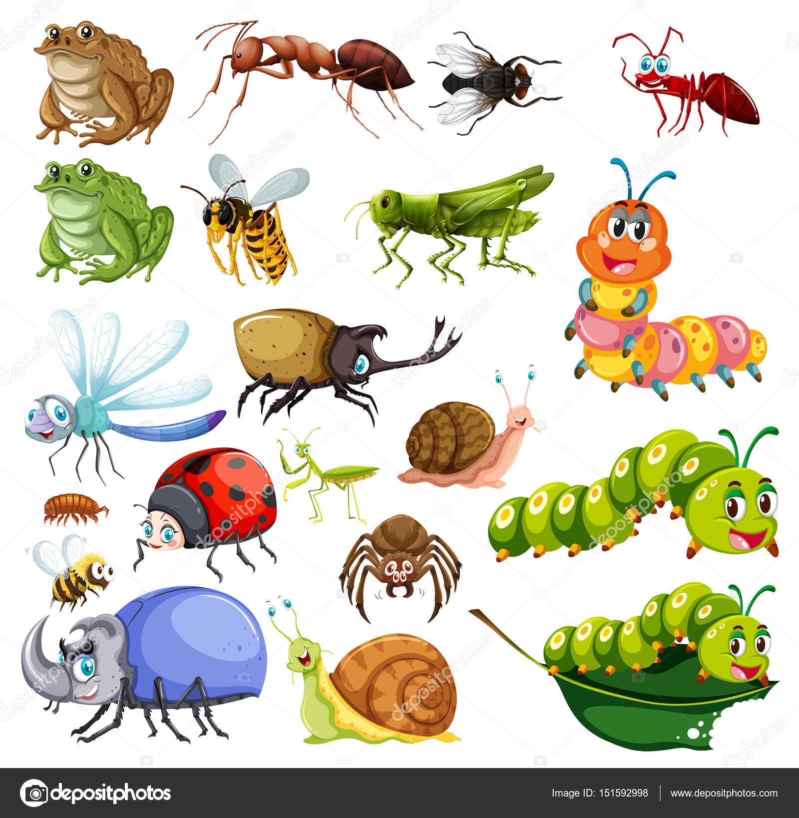Полезные насекомые в саду. Как привлечь насекомых?. Список.