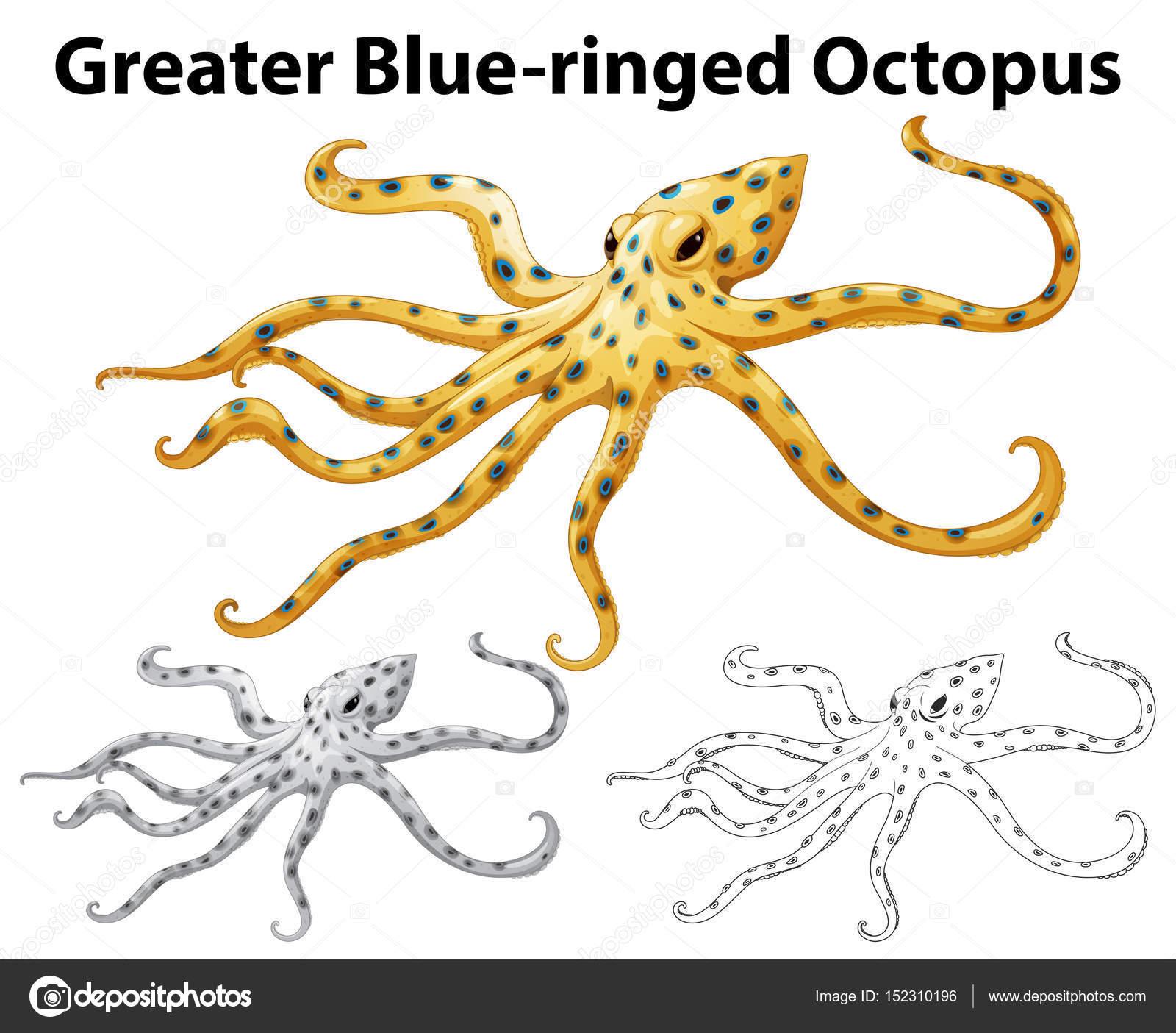 5ddd79342f18 Рисунок животных для большей наглядности Голубой Кольчатая Осьминог.  Осьминог vektor — вектор от blueringmedia — Вектор от blueringmedia