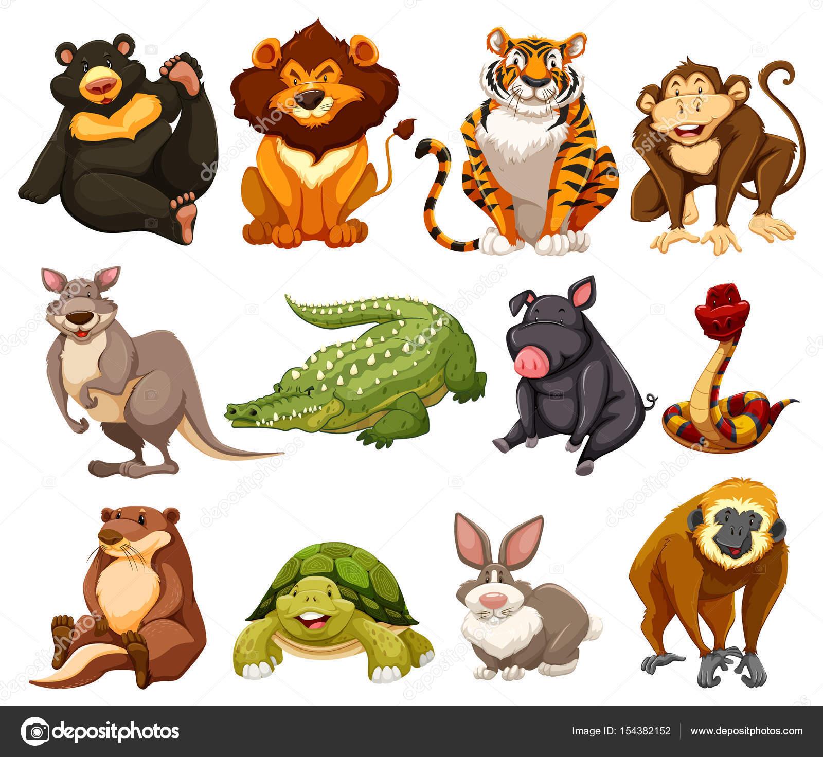 Image Animaux De La Jungle différents types d'animaux de la jungle — image vectorielle