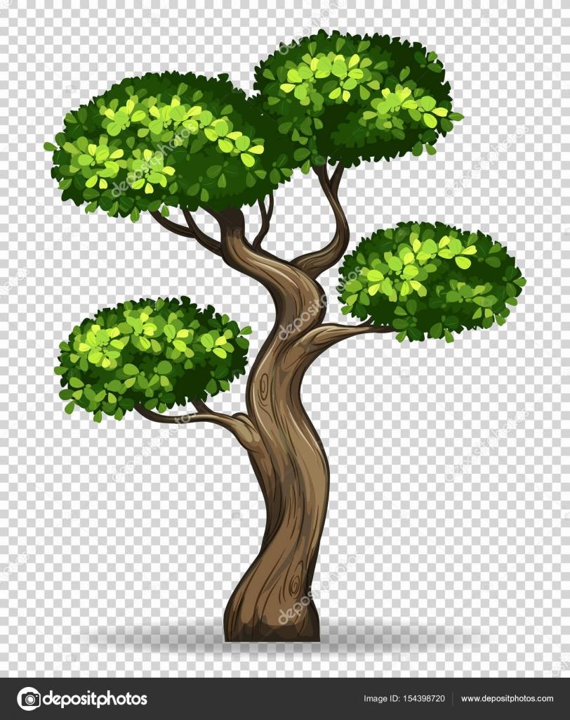 bonsai baum auf transparenten hintergrund stockvektor blueringmedia 154398720. Black Bedroom Furniture Sets. Home Design Ideas