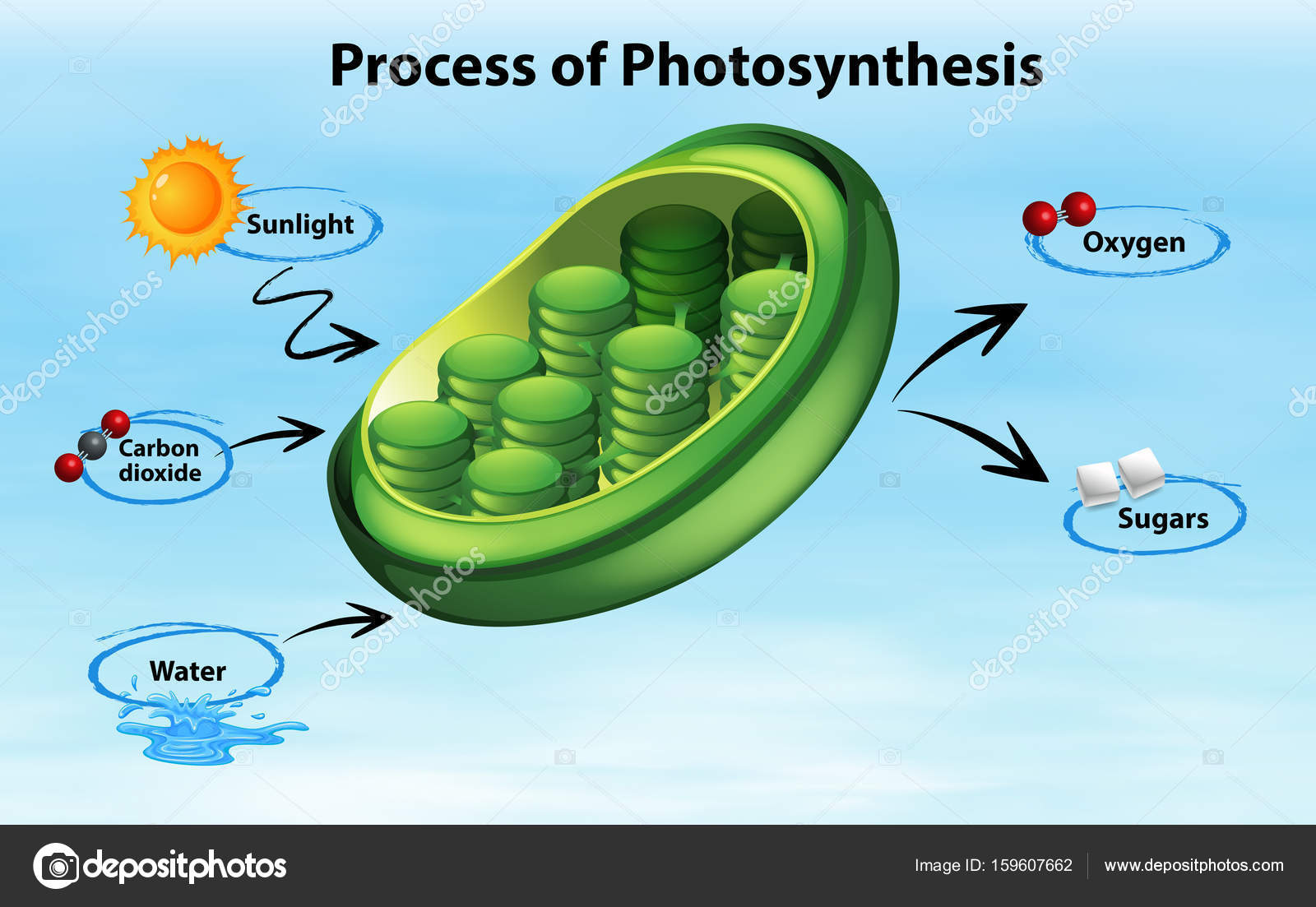 Diagram showing process of photosynthesis stock vector diagram showing process of photosynthesis illustration vector by blueringmedia ccuart Images