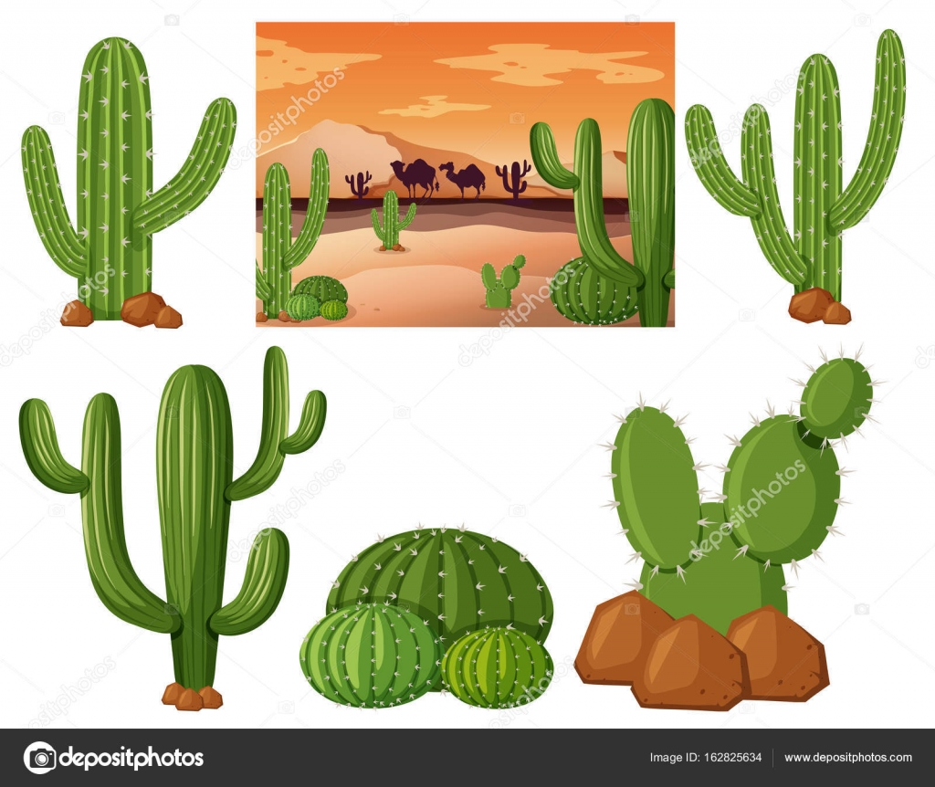 Imágenes Nopales Para Colorear Campo Desierto Con Nopales