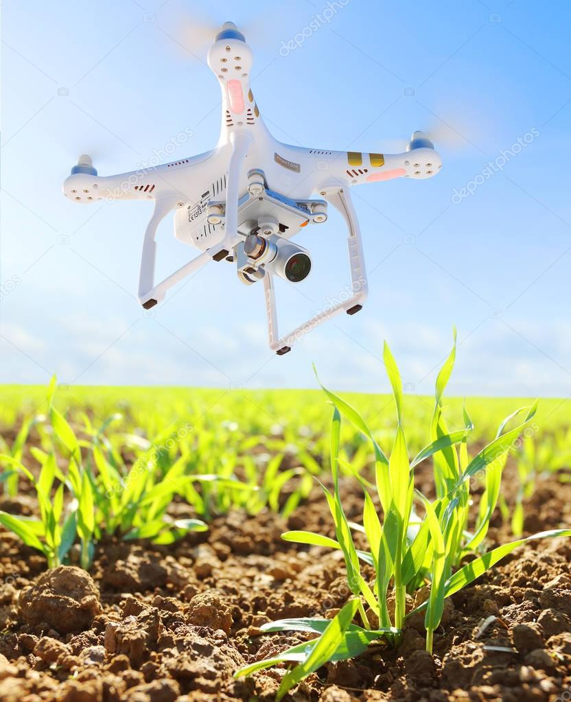 Farmer use drone for inspect of crop on wheat fields