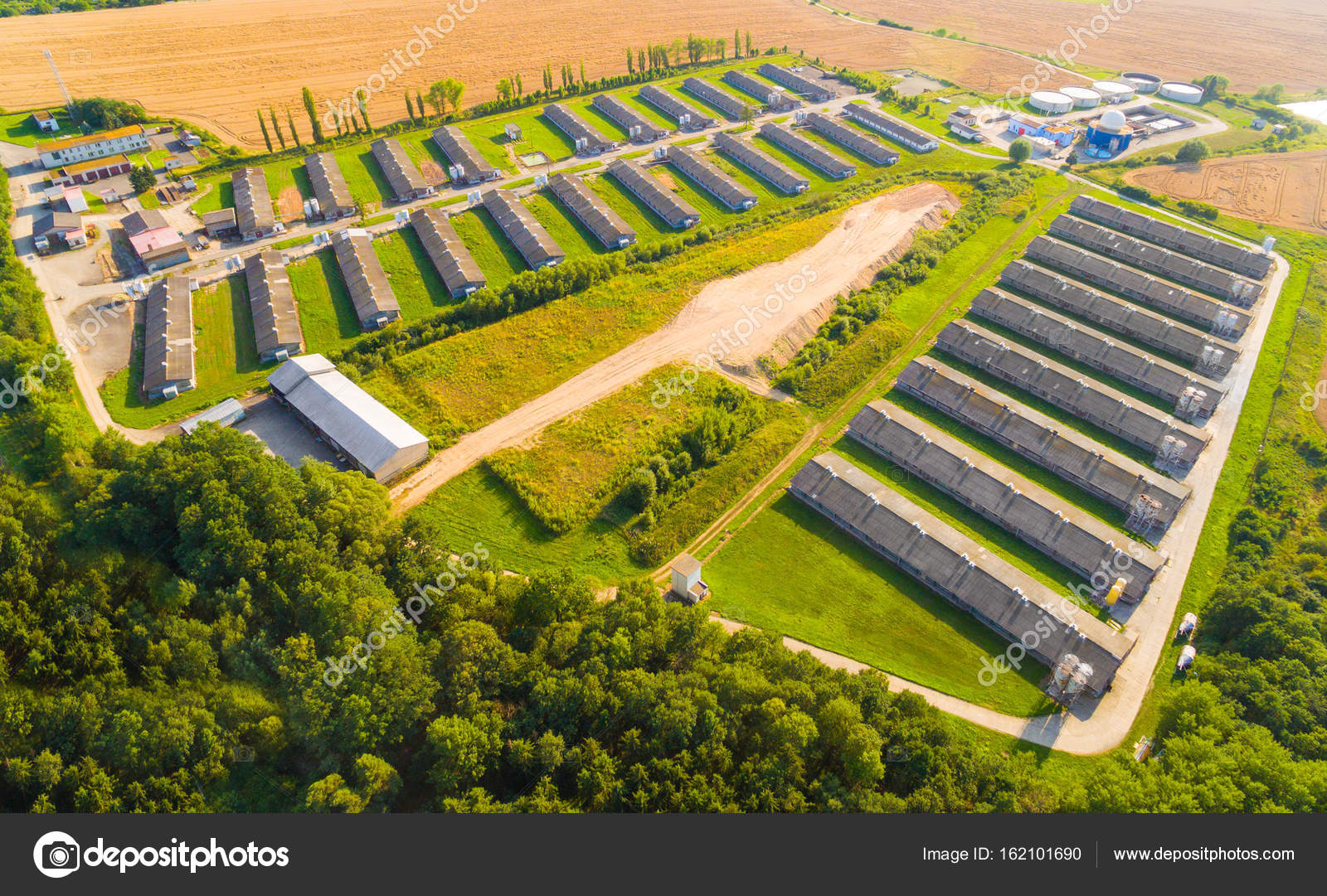 Aerial View To Pig Farm In Wheat Fields Agriculture From Above Photo By Vladvitek