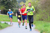 polovina maratonce