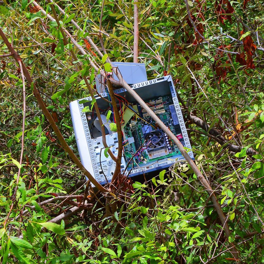 Overgrown computer in vegetation