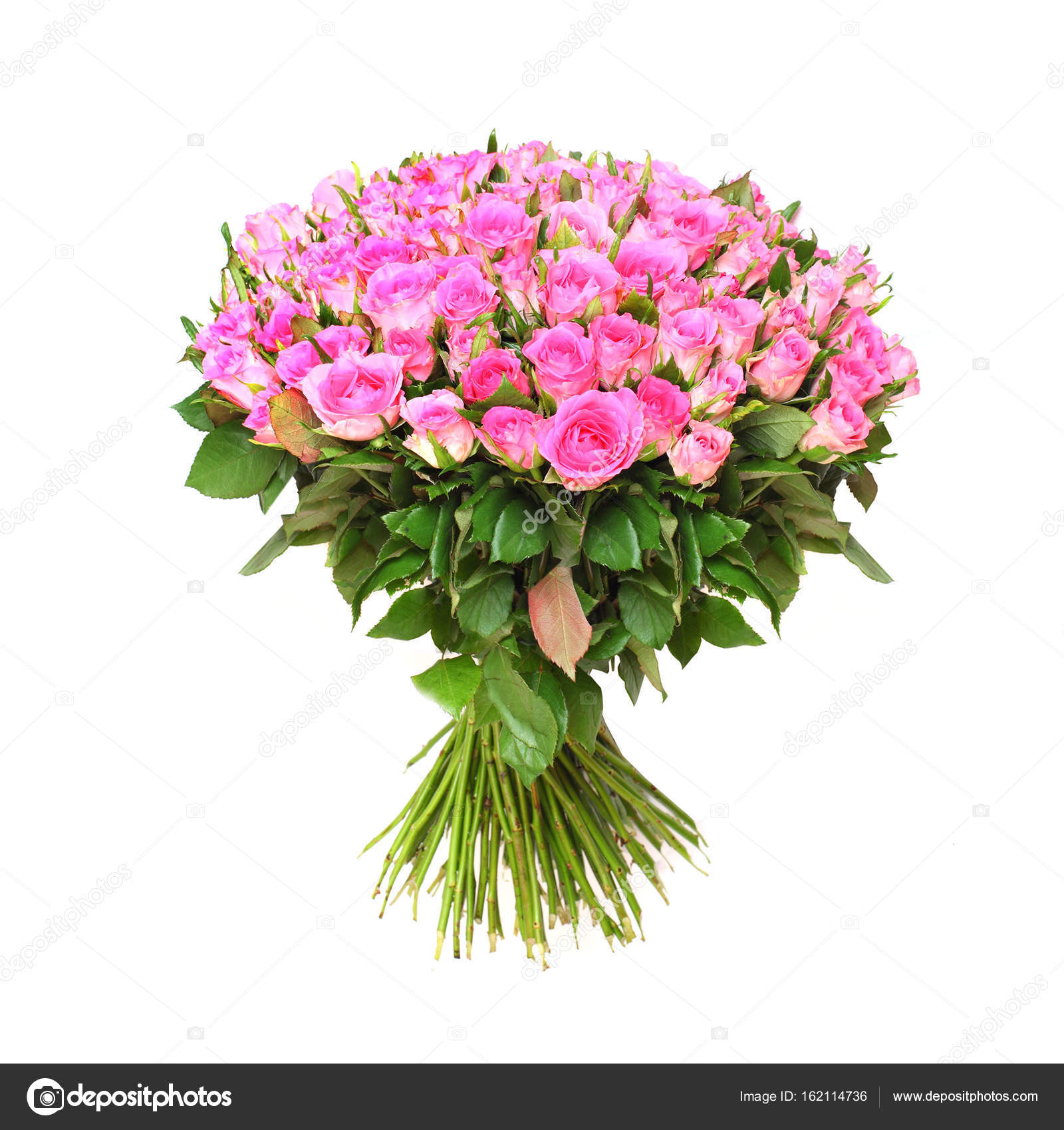 Hundred Pink Roses Bunch Flowers White Background Great Gift Stock