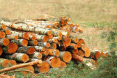 vyjmout protokoly v lese. palivové dříví. Příroda