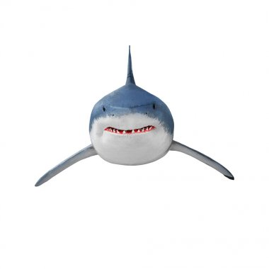 The Great White Shark - Carcharodon carcharias isolated on white.