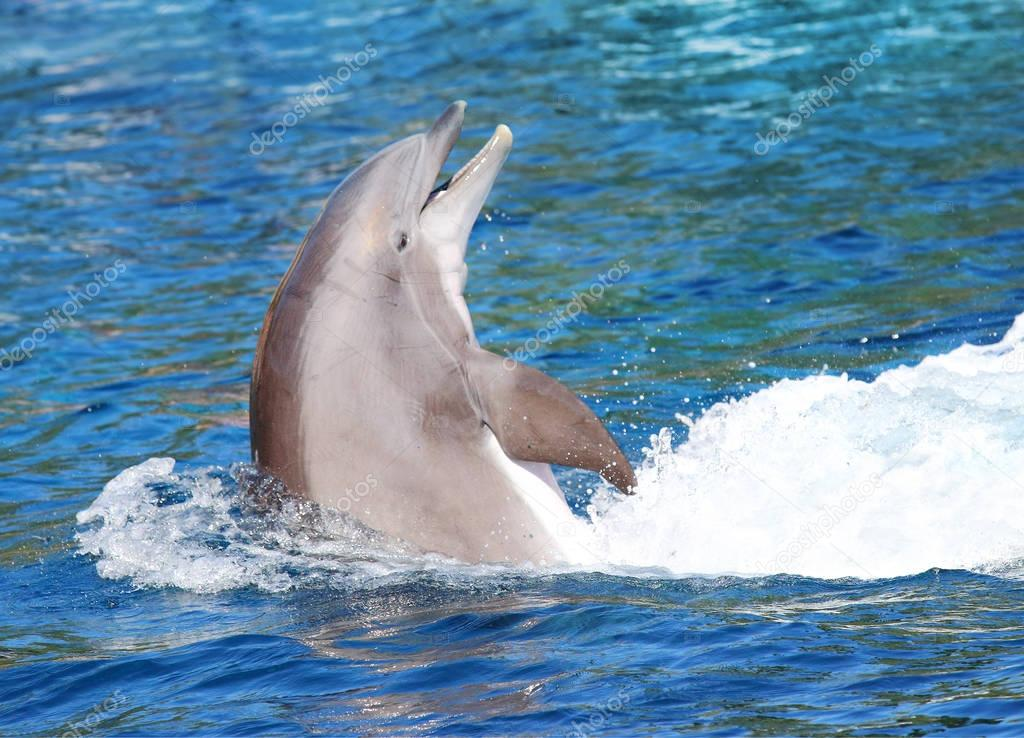 Cheerful Dolphin playing in ocean waves