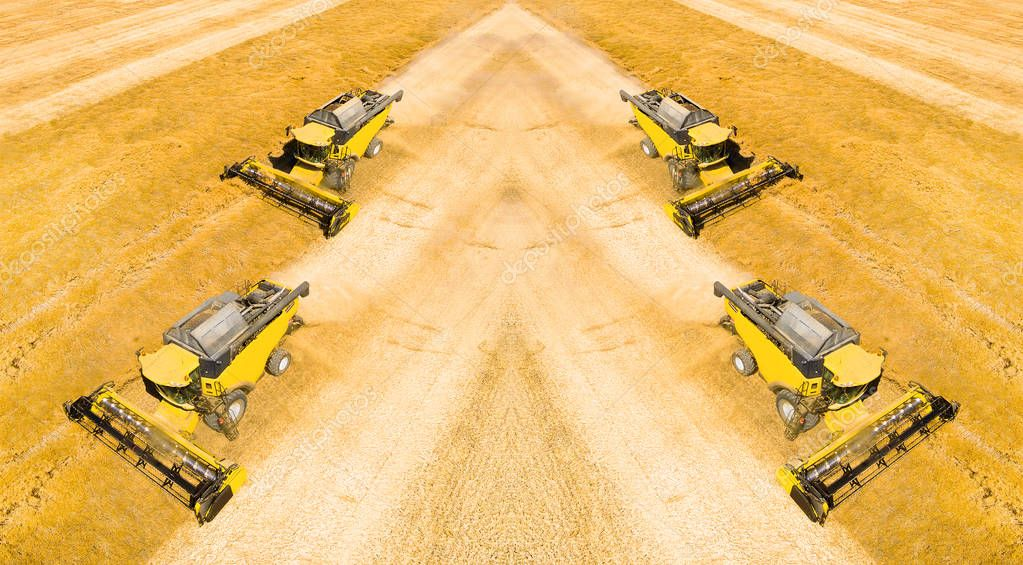 combine harvesters on wheat field
