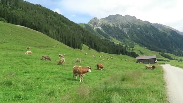 Zillertal valley landscape with meadow, barn and stream. Located at Schoenachtal valley in Tirol (Austria).
