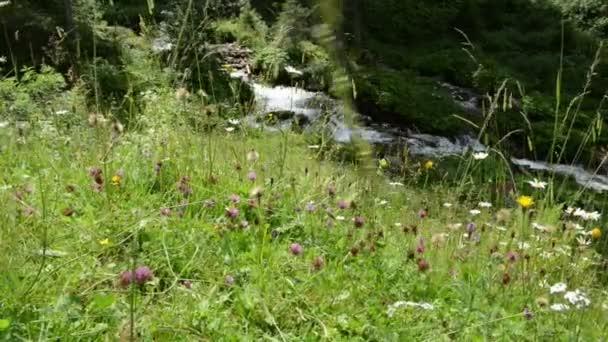 flower meadow in front of wild stream at Zillertal valley Schwarzachtal (Tirol, Austria)