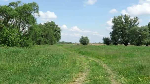 typická krajina Havelland s loukou (Německo). cesta vede přes louku