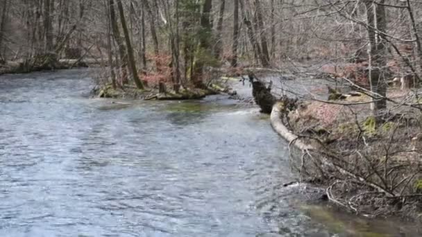 Landschaft des Wuerm Flusslandschaft im Frühling