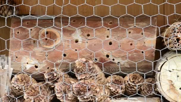Hmyzu přístřeší s kmeny, bambusových tyčinek a šiška