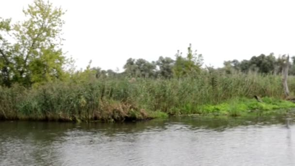 passing by Havel river landscape with willow tree and meadows. Havelland (Brandenburg, Germany)