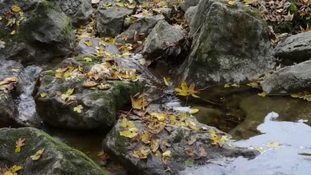 Herbstzeit in der Maisinger Schlucht in Bayern)