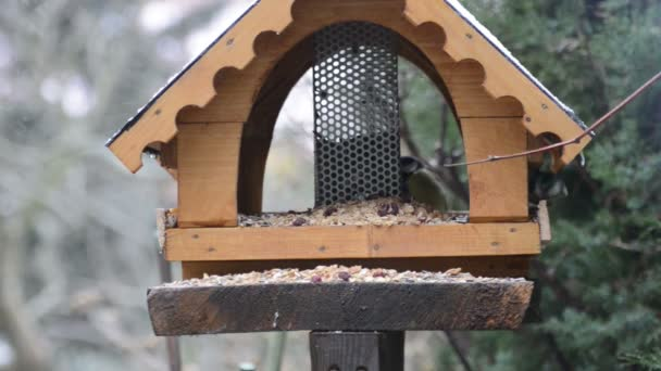 Eurasian blue tit (Cyanistes caeruleus) and great tit (Parus major) on bird feeder in winter. bird feed house