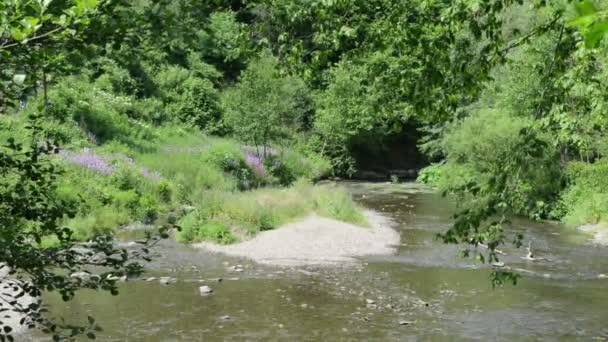 Elz river with forest all around. The river flows along the village Monreal and the castle Burg Eltz. (Eifel, Germany)