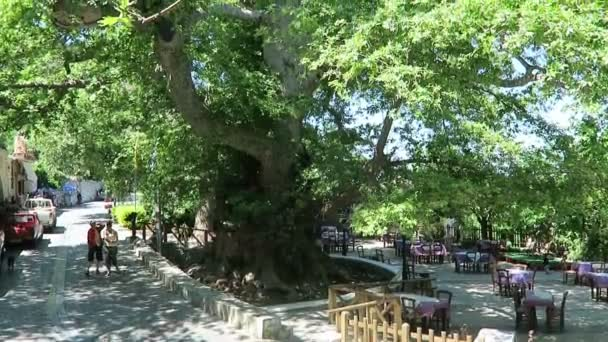 over 2000 years old platanus tree growing on the middle of village Krasi, in mountains of Crete. (Greece).