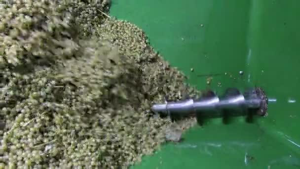 vinobraní v řece mosel (Německo). hrozny na přívěs
