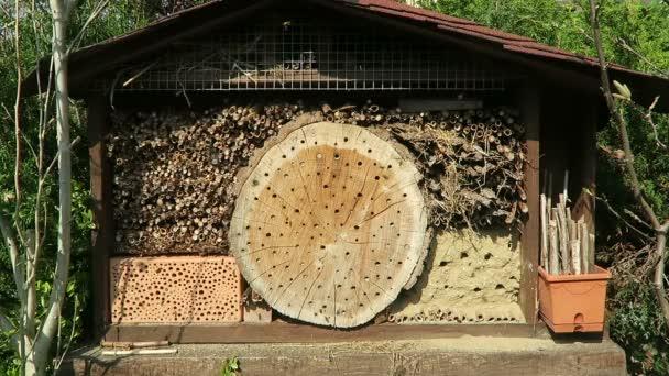 divoké včely Osmia Bicornis v hmyzu box hotel.
