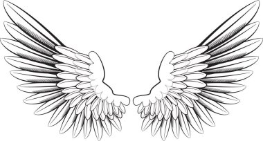 Wings on white illustration