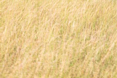 blur   abstract grass like background