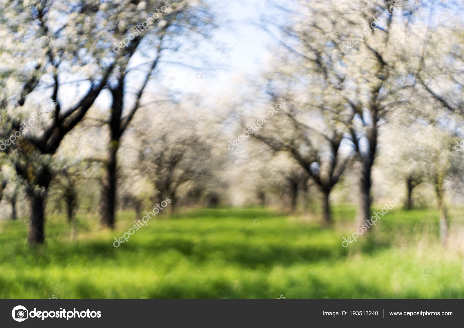 Giardino dei ciliegi in primavera. fuori fuoco u2014 foto stock © nazzu