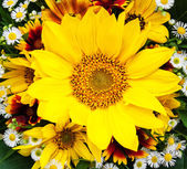 bouquet of sunflowers and daisies
