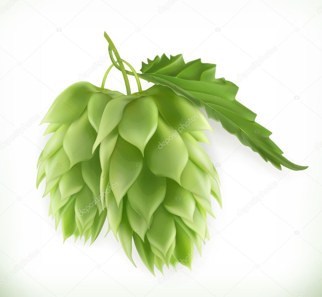 Hop plant 3d vector icon
